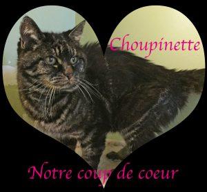 coeur-choupinette